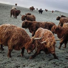Now now coos, no need to fight! You'll all get a turn at sledging down the hill…