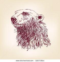 polar bear hand drawn vector llustration realistic sketch