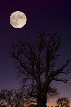 Tree by Moonlight (by Jeff Dalton)