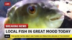 """These Breaking News Parodies Took an Adorably Wholesome Turn - Funny memes that """"GET IT"""" and want you to too. Get the latest funniest memes and keep up what is going on in the meme-o-sphere. Reaction Pictures, Best Funny Pictures, Funny Photos, Live Breaking News, Fishing Humor, Fishing Stuff, Wholesome Memes, Dankest Memes, News Memes"""