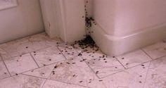 RENOVAÇÃO: Remédios caseiros para você livrar sua casa das fo...