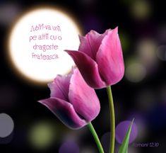 Versete de Aur : 01.11.2013 - 01.12.2013 Aur, Rose, Flowers, Plants, Pink, Plant, Roses, Royal Icing Flowers, Flower