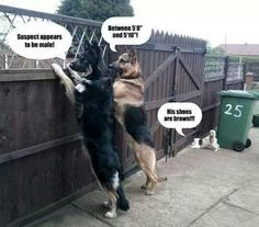 Profilers ;) Funny Animal Pictures, Cute Funny Animals, Funny Cute, Dog Pictures, Funny Dogs, Funny Images, Funny Photos, Super Funny, Weird Dogs