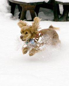 Gyro in the Snow via marthastewart.com - Contributed by BoogieBear911 (v)