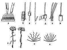 Обработка цветов, веток, тонких и хрупких стеблей перед вкалыванием в наколку: а — косой срез ветки, прямой срез травянистого стебля; б — по...