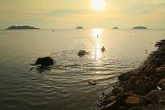 KO CHANG, THAILAND - DECEMBER 22:  Bathing elephants Ko Chang, Thailand.