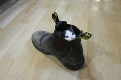 Kitten in a boot http://ift.tt/2sKKYnH