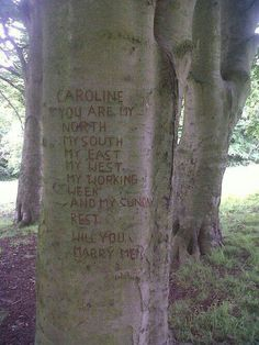 Proposal where he leads you to a tree and there's a message carved and When you turn back around and he's on one knee.