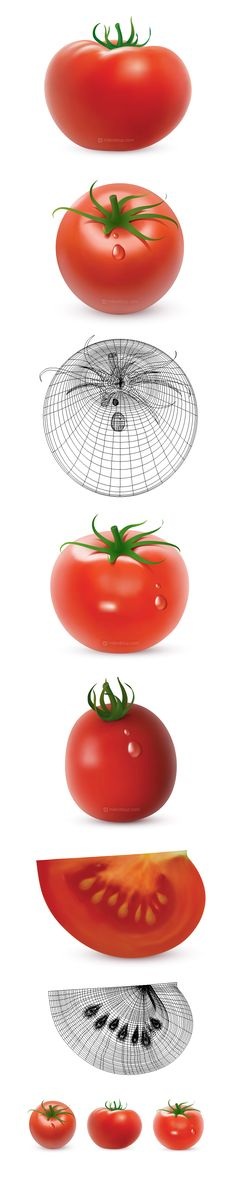 Vector tomatoes. Created in Adobe Illustrator using gradient meshes.
