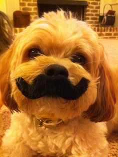 I mustache you a question... This looks like my dog. But my dog is a different color haha