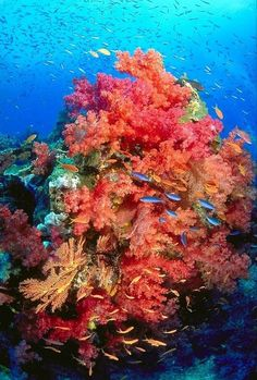 colorful coral reef, stop ocean rising acidity levels