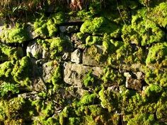 7 Best Moss Removal Images Moss Removal Growing Moss How To