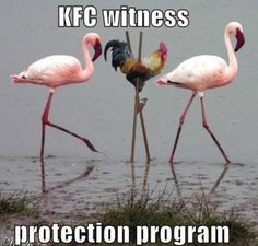 Meanwhile at the KFC protection program...