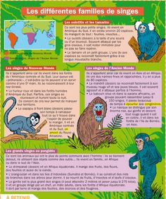 Fiche exposés : Les différentes familles de singes