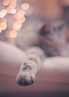 Kittens and Christmas lights