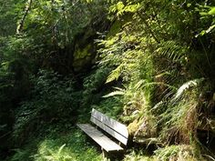Wooden bench alone