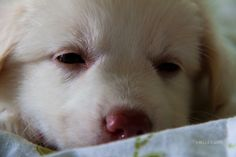 New puppy;) New Puppy, Puppies, Dogs, Photos, Animals, Cubs, Pictures, Animales, Animaux