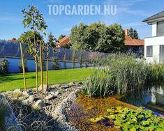 Kerti tó gyékény Kertépítés ötletek kerttervezés Vineyard, Modern, Plants, Outdoor, Outdoors, Trendy Tree, Vine Yard, Vineyard Vines, Plant