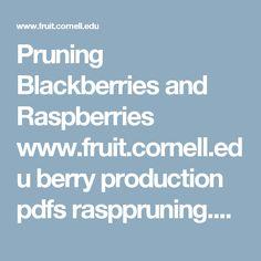 Pruning Blackberries and Raspberries  www.fruit.cornell.edu berry production pdfs rasppruning.pdf