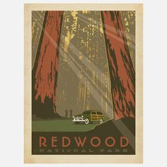 Anderson Design Group: Redwood National Park Print