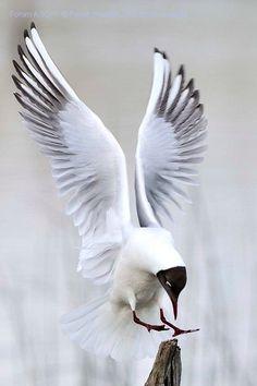 Beautiful birds, ,abstract birds, birds, bird k… – Animal Planet Pretty Birds, Beautiful Birds, Animals Beautiful, Beautiful Pictures, Exotic Birds, Colorful Birds, Small Birds, Bird Wings, Parrot Wings