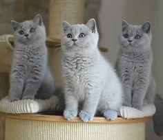 J'aimerais les avoir tous les trois. Une merveille de petits chats bottés!!!!