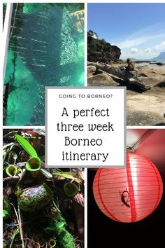 Make the most of three weeks in Borneo. Get a full three week Borneo itinerary with information about hiking in Bako National Park, cave exploring in Mulu National Park, wildlife spotting on Kinabatangan River and much Borneo Travel, Malaysia Travel, Asia Travel, Best Travel Guides, Travel Advice, Travel Tips, Travel Ideas, Travel Route, Malaysia