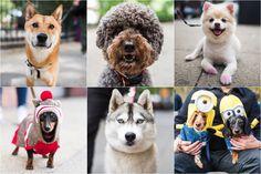 The Dogist: fotografar cães como se fossem humanos | P3