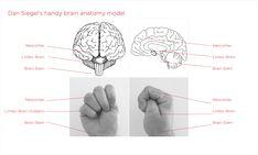 dan siegel hand model of the brain Whole Brain Child, Whole Brain Teaching, Coping Skills, Social Skills, Triune Brain, Brain Pictures, Brain Models, Conscious Discipline, Brain Anatomy