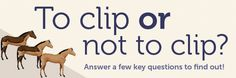 To Clip or Not to Clip...that is the question. Read more and find out if clipping is right for your horse.