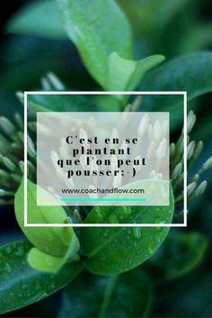 """""""C'est en se plantant que l'on peut pousser"""" ; #citation #grandir, """"progresser, #pousser, #échec """"accepteréchec"""