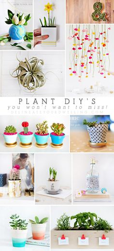 Plant DIYs you won't want to miss! - Delineate Your Dwelling