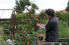 What Crops to Grow & What to Cull | Permaculture magazine