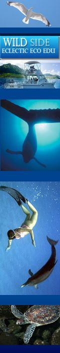 Wild Side Specialty Tours ~ eco-sensitive for a memorable tour in the waters of the spinner dolphins off Oahu