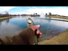 Saturday Fishing at Frisco Commons #flyfishing - Stocker Trout Fishing
