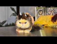 GROOMER OF THE WILD THINGS - Google Search