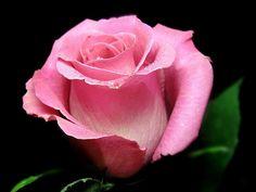 Роза из полимерной глины. Видео от Анатольевича