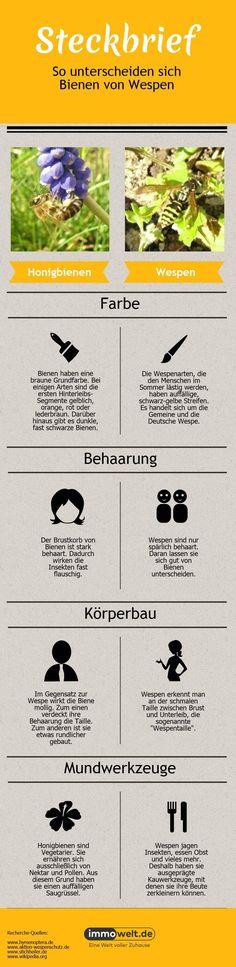 Bienennest, Biene, Wespe, Grafik: immowelt.de