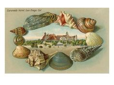 san diego artist shells | Sea Shells, Hotel del Coronado, San Diego, California Poster at ...