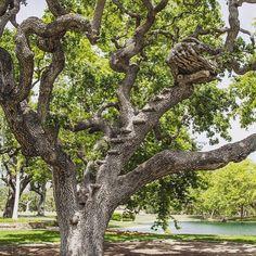 Michael's Giving Tree