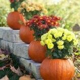 Cute idea for the fall. I hope my pumpkins grow...
