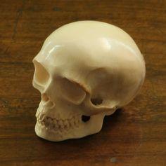 Schädel Totenkopf Mammut Bein Skull Mammoth Tusk | eBay