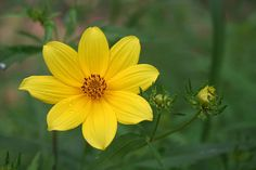 Wildflower after a quick rain at Riverview Park in Pittsburgh by Melissa @ Pittsburgh Parks Conservancy, via Flickr