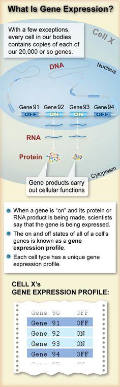 gene expression visual