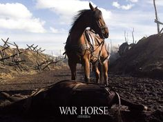 War Horse is a 2011 epic war film adaptation of War Horse, a 1982 children's novel set before and during World War I, by British author Michael Morpurgo, and the 2007 stage adaptation of the same name. It was directed by Steven Spielberg. Horse Movies, Michael Morpurgo, Horse Wallpaper, Horse Names, War Film, Film Studies, Steven Spielberg, Horse Art, Great Movies