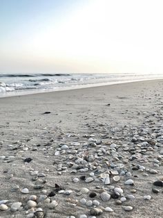 Am Meer, Yoga, Algarve, Seashells, Beach, Water, Outdoor, Travel Inspiration, Viajes