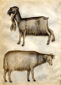 The Seraphic Book of Eloy Giovannino de Grassi (1340-1398)