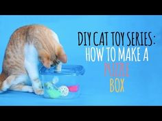 Cats Toys Ideas - DIY Cat Toys - How to Make a Puzzle Box - Ideal toys for small cats Homemade Cat Toys, Diy Cat Toys, Cats Diy, Dog Toys, Cat Toilet Training, Dog Training, Ideal Toys, Cat Scratching Post, Puzzle Box