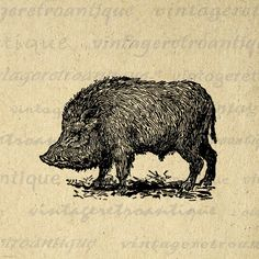 Printable Wild Boar Digital Image Antique Illustration Graphic Download Vintage Clip Art. Vintage high quality digital image for making prints, transfers, tote bags, tea towels, and other great uses. Personal or commercial use. This image is high quality and high resolution at size 8½ x 11 inches. A Transparent background png version is included.