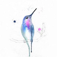 Blule - Petit Colibri De Paradis - On a feathered tree